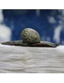 Escargot en serpentine - décoration jardin , les oizeaux de passage