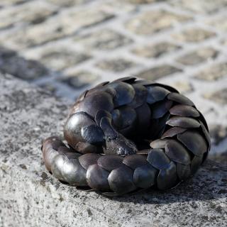 """Journée mondiale du Pangolin. Cette petite """"boule d'écailles"""" est le mammifère le plus trafiqué au monde. Chaque année, ce sont plus de 35 tonnes d'écailles de pangolin qui sont saisies en Afrique ! https://www.lesoizeauxdepassage.fr/11-pieces-uniques #pangolin #sculpturemetal #lesoizeaux"""