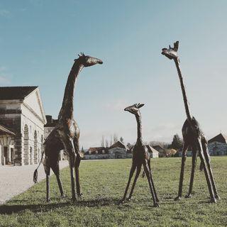 Girafes - Sculptures en métal recyclé - de 2 à 3,5 mètres de hauteur #giraffe #sculpturegirafe #sculpturemetal #pieceunique #lesoizeaux #lesoizeauxdepassage #artaujardin #salineroyale #decojardin