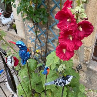 Les Oizeaux de Passage à Vézelay. Les Roses Trémières sont de retour. #vezelay #lesoizeauxdepassage #lesoizeaux